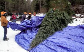Minnesota governor's mansion <b>Christmas</b> tree 'absolutely gorgeous ...