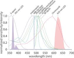 Action Spectrum Action Spectra Of Mouse Photoreceptors Gcamp6s Chrimsonr