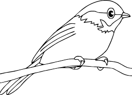 Bird Coloring Pages Perched Coloringstar