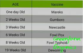 Chicks Vaccination Chart Greenfarm Organics Kienyeji Chicks Vaccination Schedule