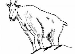 Small Picture Coloring Pages Animals Feral Goat Coloring Page Goat Coloring