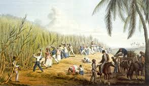 us slave slavery and sugar slavery and sugar