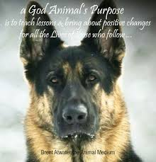 Dog Quotes Inspirational Inspiration Inspirational Dog Loss Quotes From Animal Souls W Brent Atwater