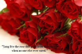 Beautiful Flowers Wallpapers For Facebook With Quo Best of Latest Most Beautiful Red Rose Pictures With Romantic Love Quotes