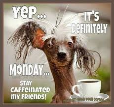 Funny Monday Morning Quotes Adorable Yep Its Definitely Monday Monday Good Morning Monday Quotes Good