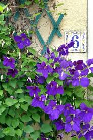 house plant with purple flowers house number 6 purple flowers stock photo image of plant