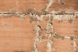termite damaged would in tequesta florida home