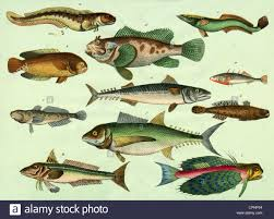 Zoology Animals Fish Fish Species Chart A Blenny