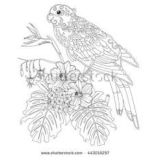 Small Picture Tropical parrot flowers and leaves Page of coloring book for
