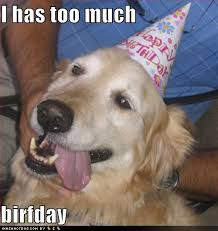 pictures | ... Airsoft Ohio Forums - funny birthday dog pictures ... via Relatably.com