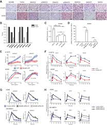 downregulation of the tgf icirc sup pseudoreceptor bambi in non small cell figure
