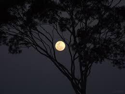 هدوء الليل