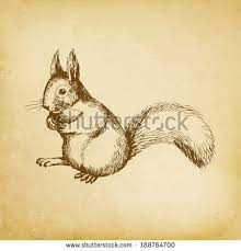 Small Picture Squirrel Sketch Stock Images Royalty Free Images Vectors
