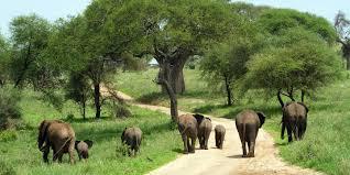 wild animals in african forest. Modren African Throughout Wild Animals In African Forest C