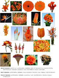 orange colored flowers readily available in western canada