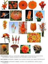 color series orange flowers for weddings