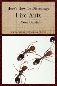 garden ants. Here\u0027s How To Discourage Fire Ants In Your Garden A