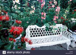 white iron garden furniture. HOLLYHOCKS AND BEE BALM MONARDA SURROUND WHITE METAL GARDEN BENCH IN AN AMERICAN GARDEN. SUMMER White Iron Garden Furniture T
