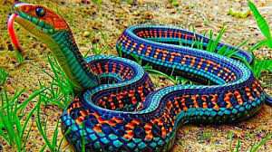 Play the classic retro mobile phone game in your web browser! 10 Most Beautiful Snakes In The World Youtube