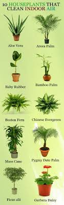22 Ways To Clean Indoor Air Naturally | Houseplants, Dog rooms and Farming