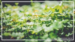 History of the <b>Four</b>-<b>Leaf</b> Clover & Clover Crafts - Southern ...