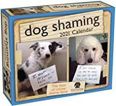 Funny Dog - Amazon.com