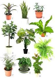 office plants no light. No Light Plants Indoor Office At Home Depot Best . S