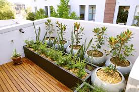 Kitchen Garden In Pots Being An Urban Gardener Creating A City Vegetable Garden