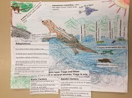 Biology Chinook Academy Kemper Finding Your Niche Poster Project