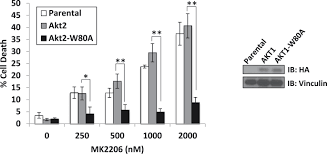 a kinase independent function of akt promotes cancer cell survival figure 1 figure supplement 5