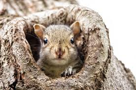 What To Do If You Find A Baby Squirrel