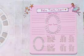 Baby Tooth Album Tooth Fairy Land Collection Mixed Carton 12 Boy 12 Girl