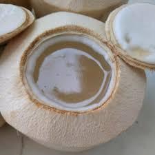 1 sachet nutrijell degan 1 sachet agar hijau 1 sachet fiber creme gula merah gula putih vanili bubuk 2 helai daun pandan. Jual Degan Jelly Di Lapak Nurbiana Bukalapak