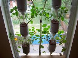 Hydroponic Kitchen Herb Garden Cool Ideas Indoor Window Garden Interesting Diy 20 Of Window Herb