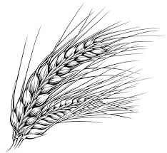 wheat drawing. Interesting Drawing Pen U0026amp Ink Illustrations Food Beverage  KeithWitmercom  Illustration In Wheat Drawing