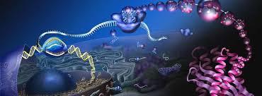 El Nobel de Química va para la criomicroscopía electrónica