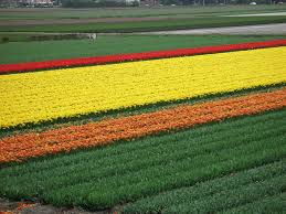 essay about gardening water garden ilona bell cultivates a  photo essay keukenhof the world s largest flower garden here s