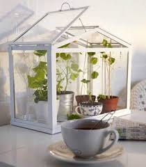 Window decorating with indoor plants, modern ideas in eco style table top  greenhouse