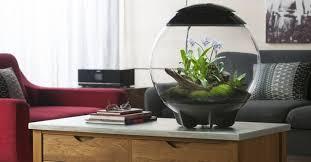 low maintenance office plants. BiORB Terrariums For Offices | Low Maintenance Office Plants C