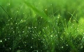 download 1920×1200 Grass Wallpaper ...