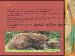 Животные красной книги для детей картинки ru Фото животные красной книги для детей картинки