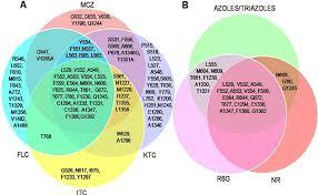 Venn Diagram Excel 2013 Venn Diagram Showing Association Of Mutant Phenotypes Which
