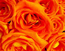 Jambo orange mood