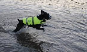 Kyjen Vs Paws Aboard Dog Life Jacket Which Is The Best