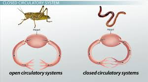 circulatory system i types of circulatory systems video  closed circulatory system definition advantage
