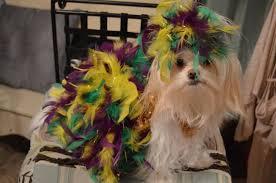 Feather Mardi Gras