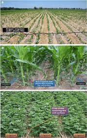 Regulated Deficit Irrigation For Crop Production Under Drought