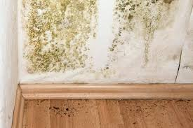 how to kill bathroom mold. What Kills Bathroom Mold Kitchen To Remove From Walls Spores Under How Kill M