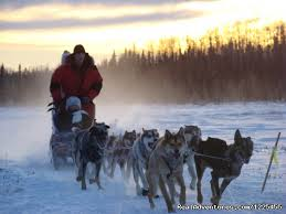 salmon berry tours photo salmon berry tours dog sledding in anchorage alaska
