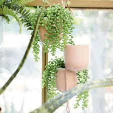 best places to fake plants